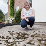 Seaweed rains on English village
