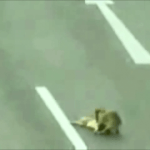 Hero Dog Rescues Injured Dog on Highway