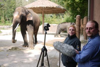 Elephant learns to speak Korean