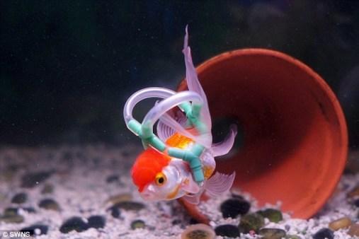 disable fish