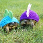 Tortoise Fashion