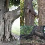 Rude Trees