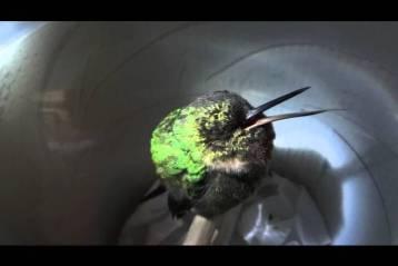 weird nature video