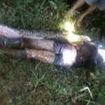 Missing Man Found Inside Python