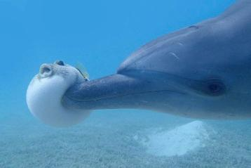 dolphin on drugs