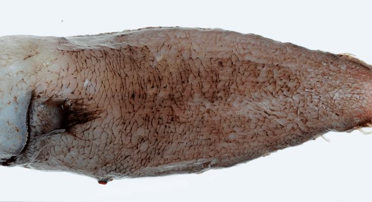 STRANGE FISH ODD FISH