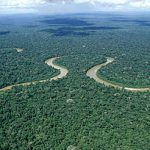 Research shows that the Amazon is not the lungs of the planet