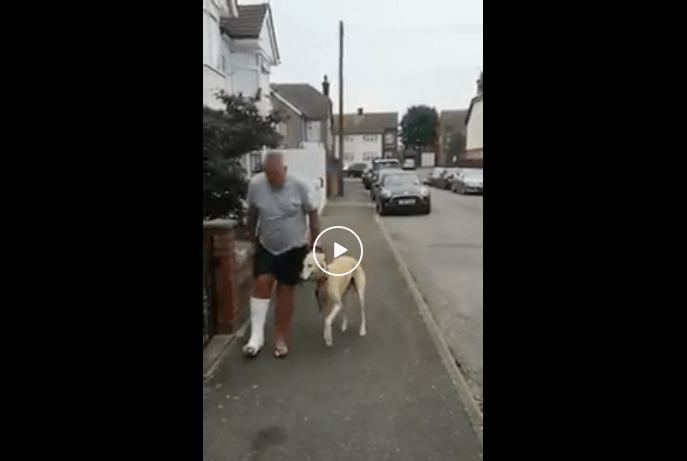 This bloke spent £300 on vets fees and X-rays and it turned out nothing was wrong with the dog,