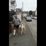 Man on crutches spends money on vets bills only to discover dog is limping out of sympathy.