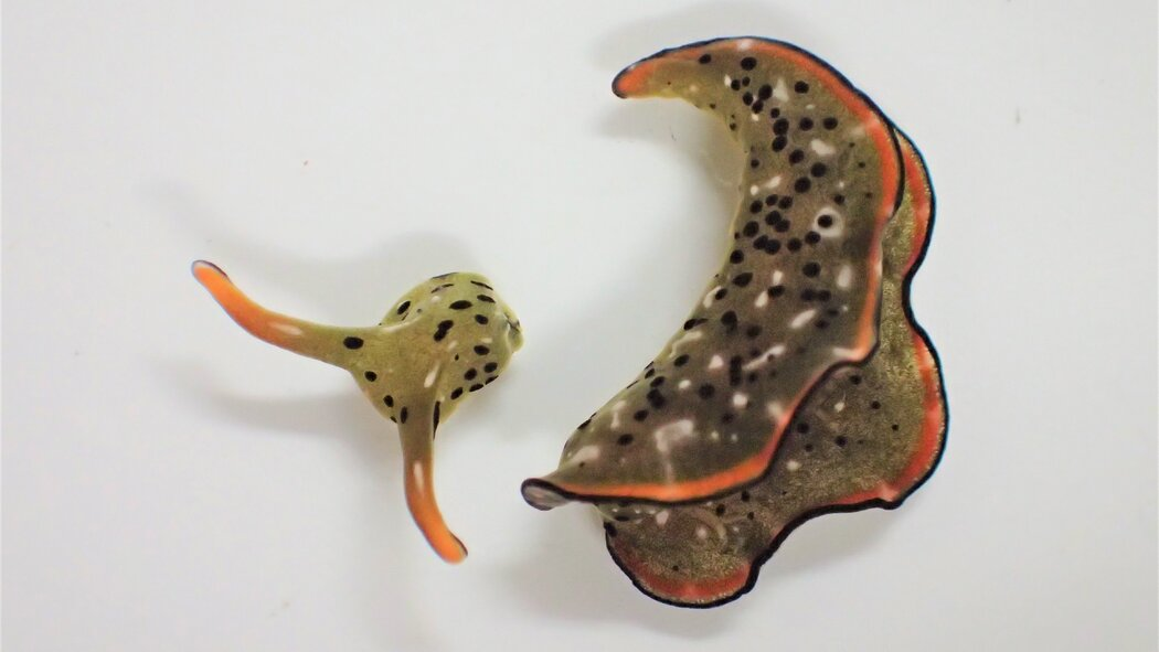 freaky video sea slug