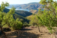 The olive and almond orchard on the mountain slopes with a view to die for!