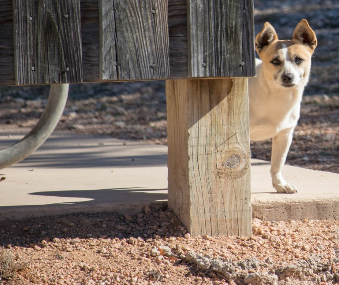 Llano The Stray Dog