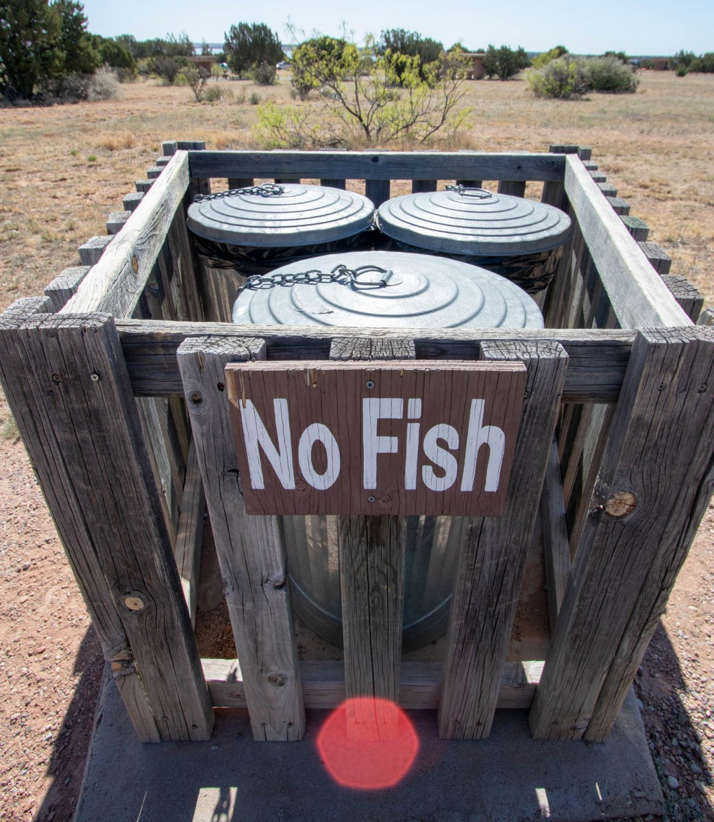 No Fish In Trash Cans