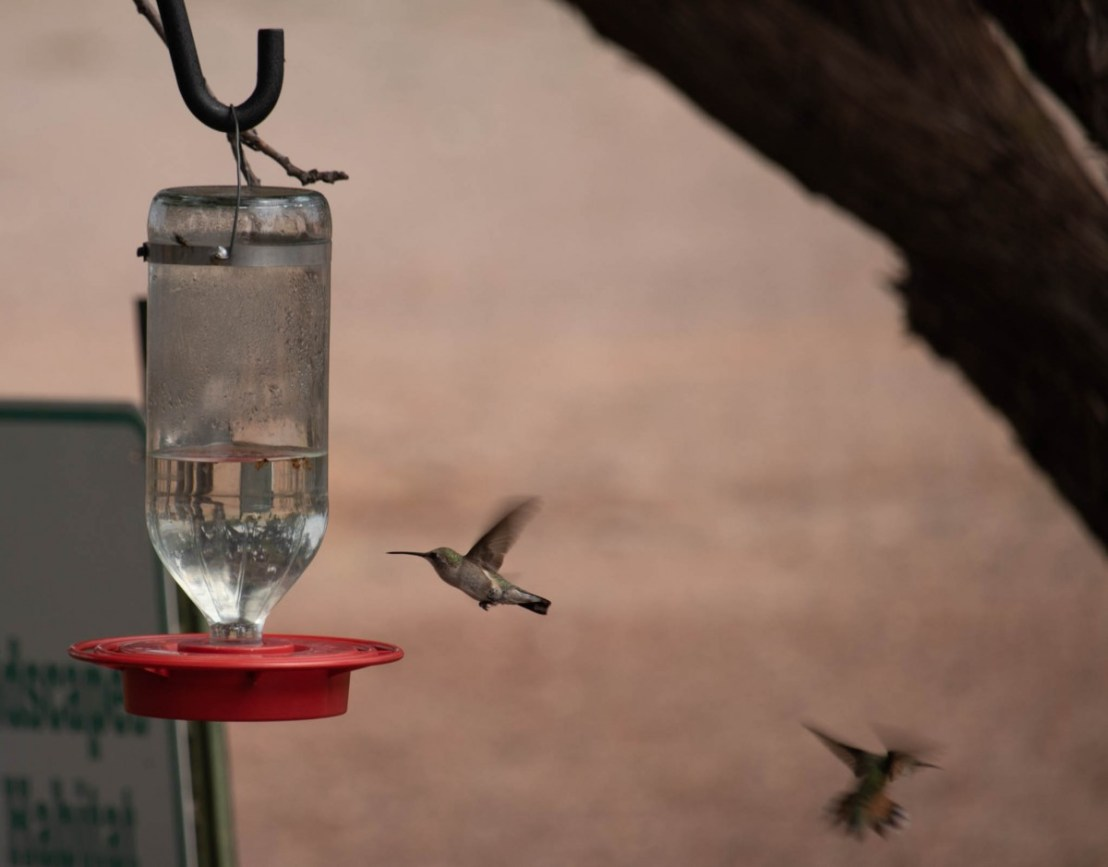 Territorial Hummingbird Dispute at Feeder