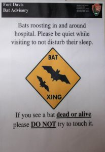 WARNING: Bat Infested Hospital