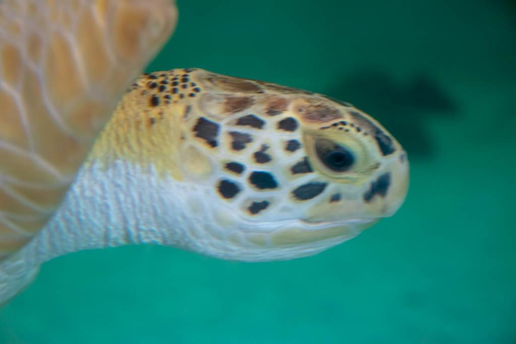 Turtle Beauty