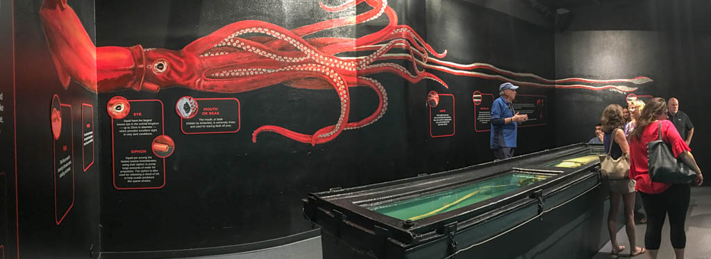 Man-Eating Giant Squid Display