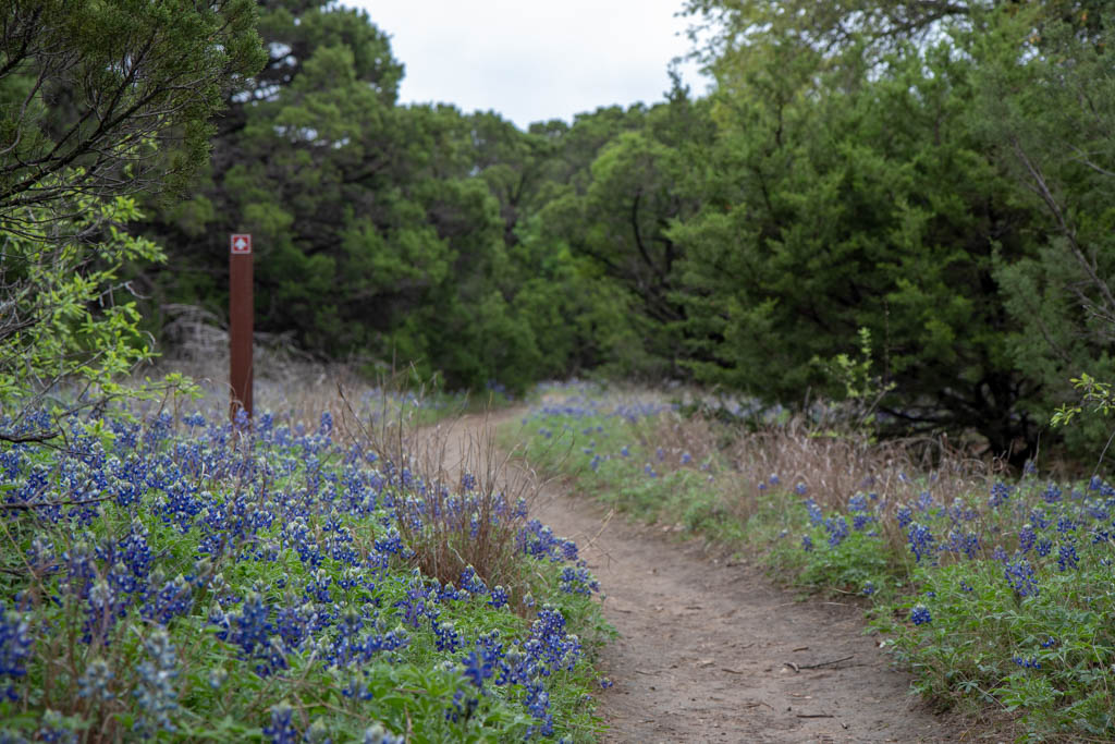 Coyote Run Nature Trail - Wildflower Displays