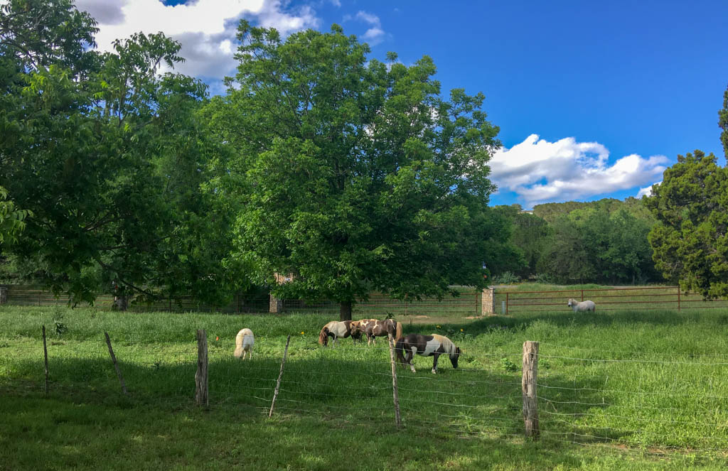 Johnson Creek RV Park Miniature Horses