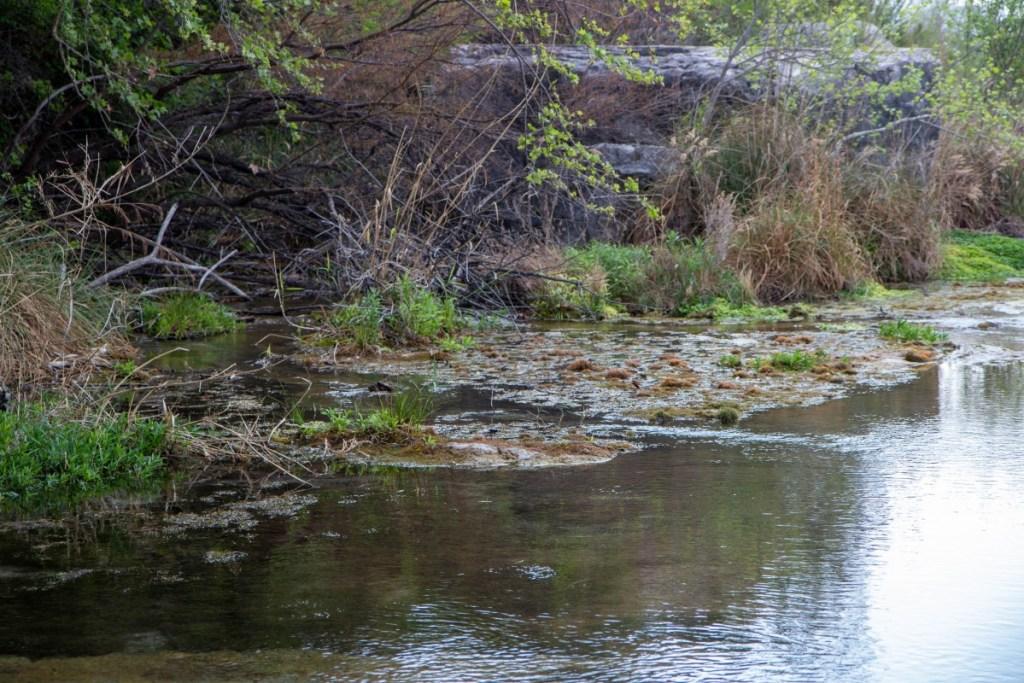 Looking Downriver, First Spring Is Left Of Boulder
