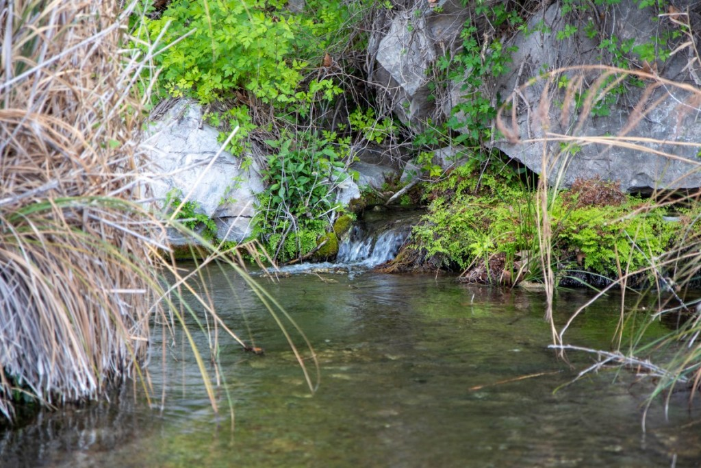 Spring Flowing From Mountainside