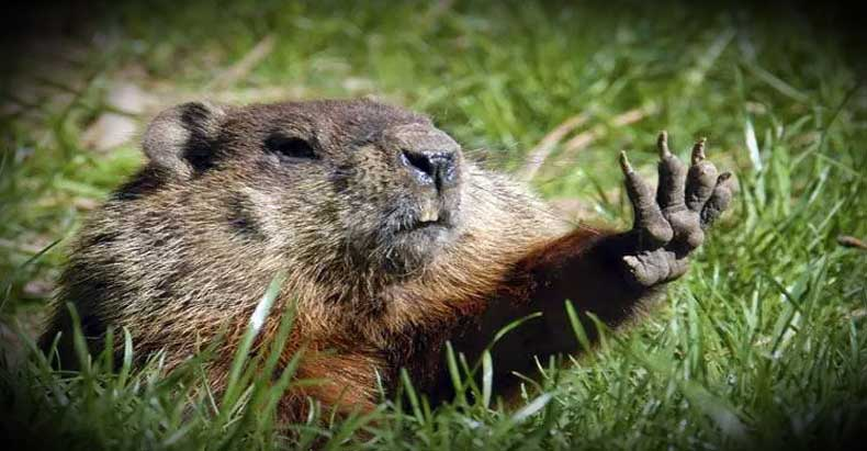 Cops Suspended for Sadistically Chasing Down, Killing a Groundhog During Police Golf Tournament