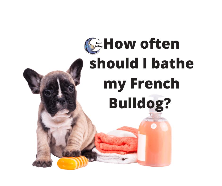 How Often Should I bathe my French Bulldog?