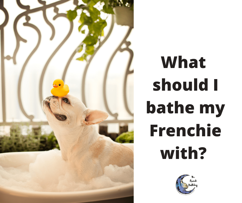 What Should I bathe my French Bulldog with?