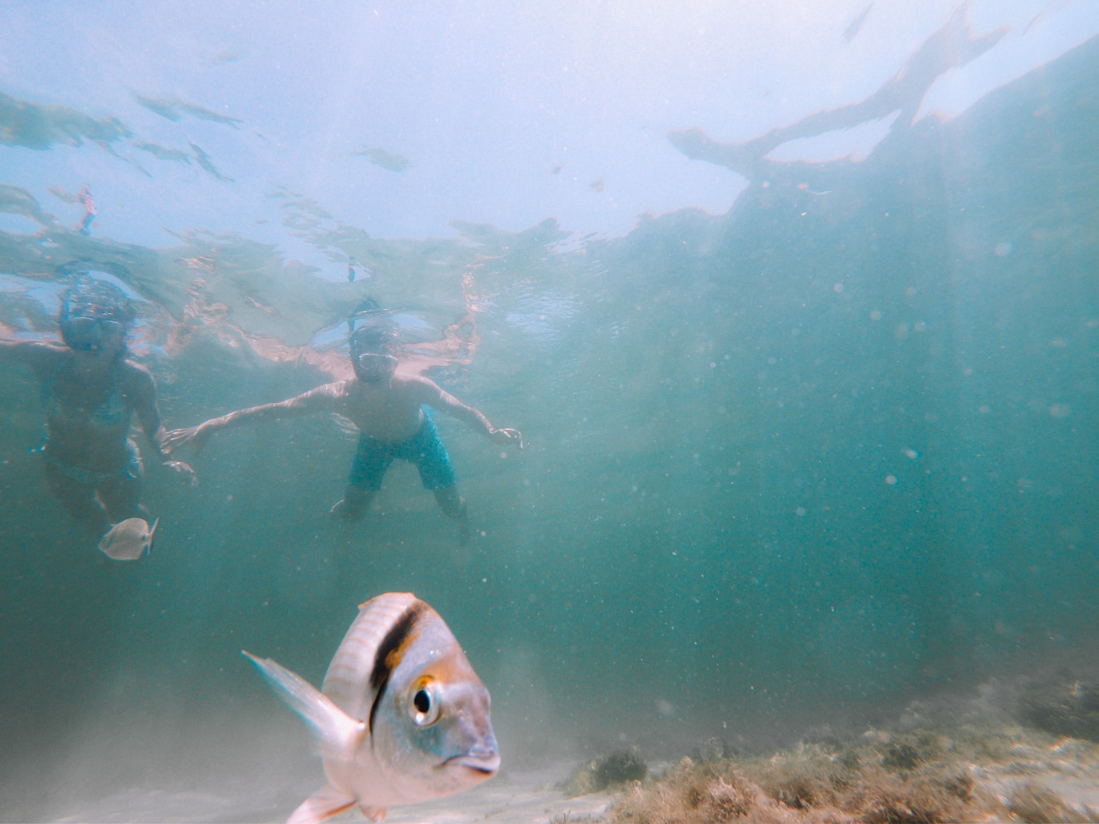 Snorkeling-sARDAIGNE