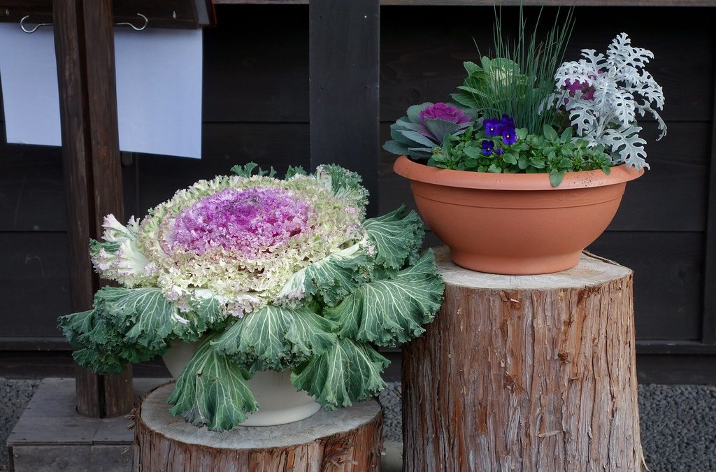 7 Budget Friendly French Garden Ideas The French Magnolia Cooks