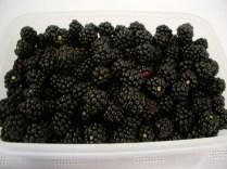 Blackberries_1