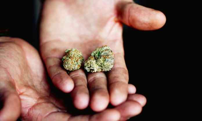 If Your Parents Used Marijuana, You're More Likely To Also
