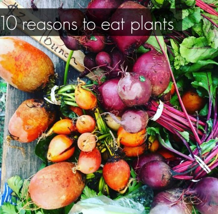 10 Reasons To Eat More Plants