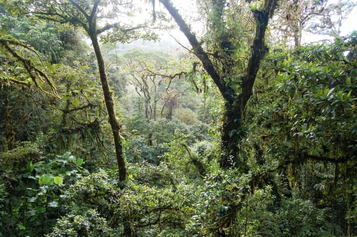 La Pura Vida! Zip lining through the jungle in Costa Rica