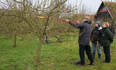 Apple pruning 2015