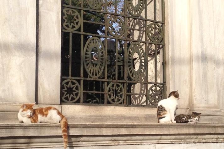 gatti-di-istanbul