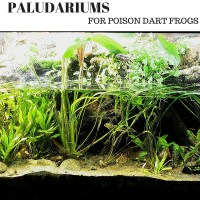 Paludarium for Poison Dart Frogs