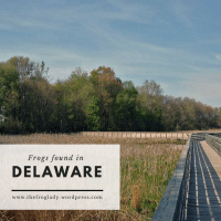 Delaware Frogs and Toads