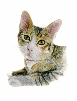 Cat portrait by maria boklach