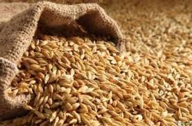 Wheat worth US$ 1.189 mln , 508.333 mln exported in FY 2017-18