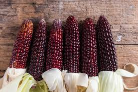 Purple corn likely to reduce inflammation, diabetes