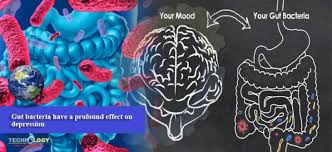 Gut bacteria have a profound effect on depression