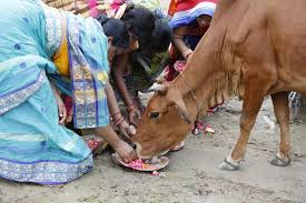 Muslim man in India killed by mob after being accused of cow slaughter