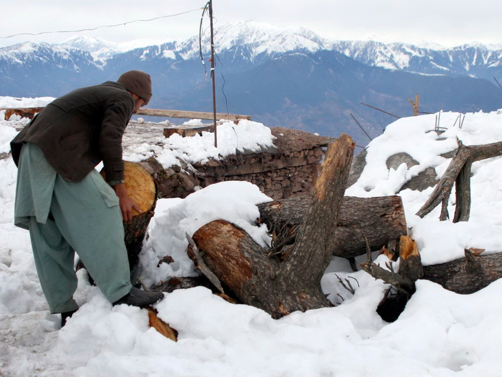 Pic19-034 MUZAFFARABAD: Nov19 – A man is busy in gathering woods for burning purpose as after the heavy snowfall. ONLINE PHOTO by Shabbir Anjum