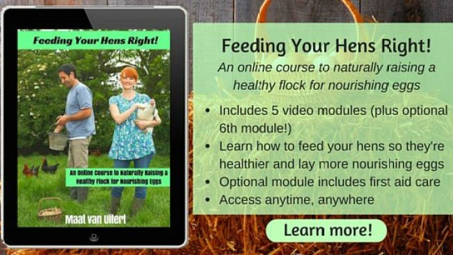 Feeding Your Hens Right! ad