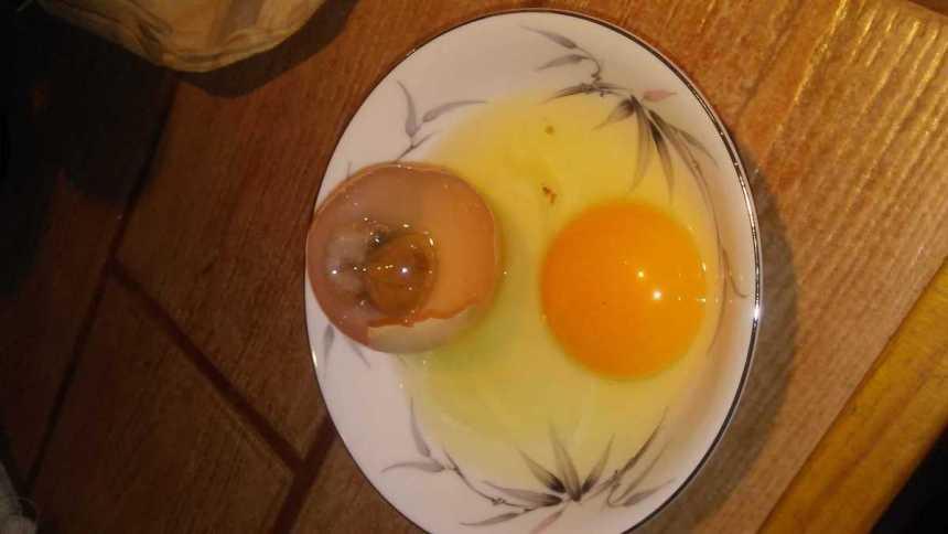 Store chicken hatching eggs