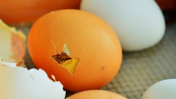Store Chicken Hatching Eggs Like A Pro + Top 3 Mistakes You Need To Avoid