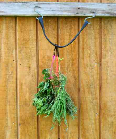 5 minute hack to preserve herbs faster