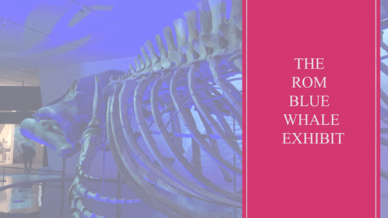 Travel | Museum | ROM | Blue Whale Exhibit