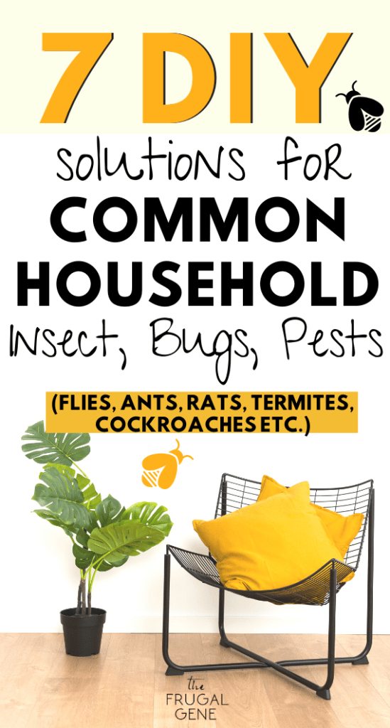 Natural solutions using frugal and cheap household ideas. The best essential oil suggestions for different pests proven and used everyday as treatment or spot cleaning everything from common house fruit flies, termites, cockroaches, woodpeckers, bed bugs, spiders, house rats & mices etc. | on a budget without spending any money, frugal tips for common pests, how to get rid of bugs with essential oils #householdhacks #cleaninghacks #householdtips #essentialoils #householdtips #frugalliving #pests